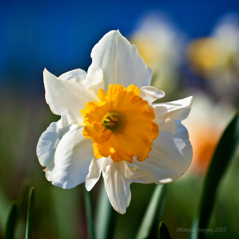SpringFinally